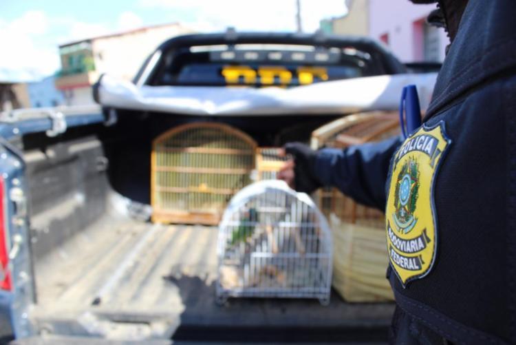 Ação coibiu a criação ilegal e o tráfico de aves - Foto: Divulgação | PRF-BA