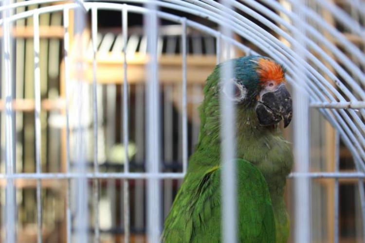 Ao todo foram resgatados 575 animais e cinco armas apreendidas usadas na caça predatória