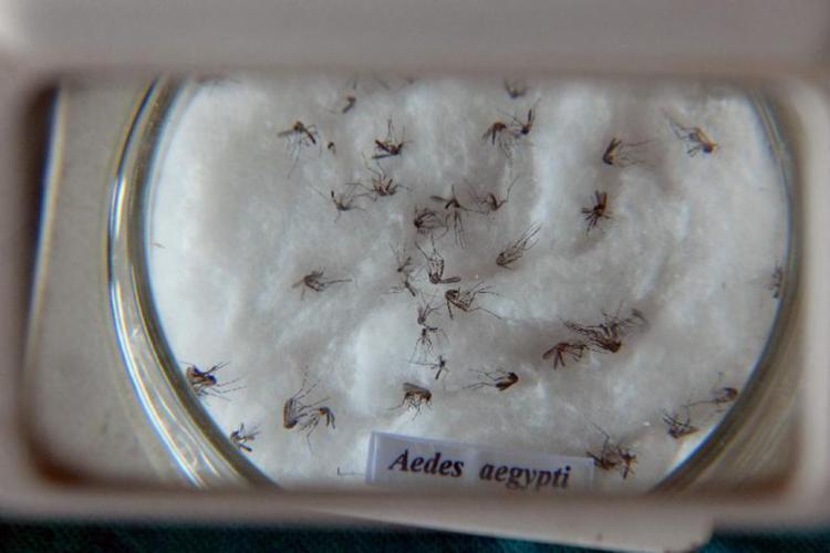 Vacina contra o vírus da chikungunya já está em testes em 24 voluntários - Foto: Arquivo | Agência Brasil