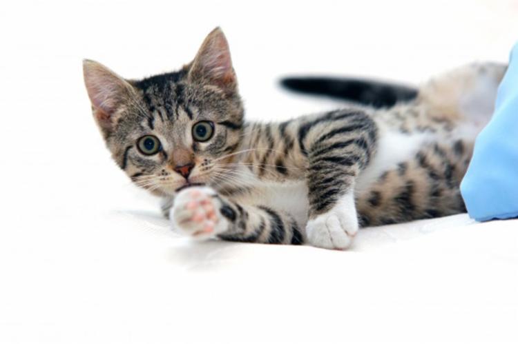 Decisão foi fruto de caso envolvendo uma gata - Foto: Ilustrativa | Freepik