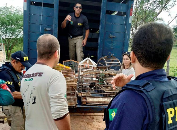 Mais de 800 animais foram resgatados durante ações para preservação ambiental - Foto: Divulgação | FPI