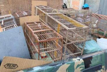 Idoso é detido com arma e mais de 50 animais silvestres | Reprodução | Radar 64