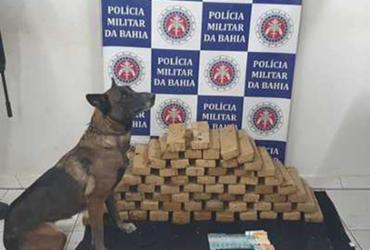 Dupla é presa com ajuda de cão policial em Porto Seguro | Divulgação | SSP