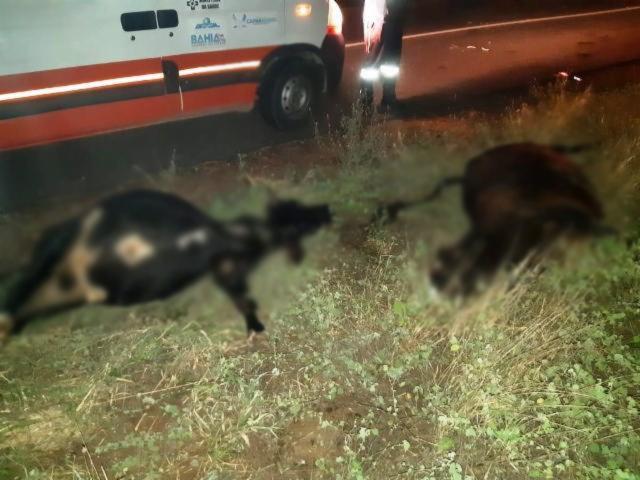 Os dois animais também morreram no local