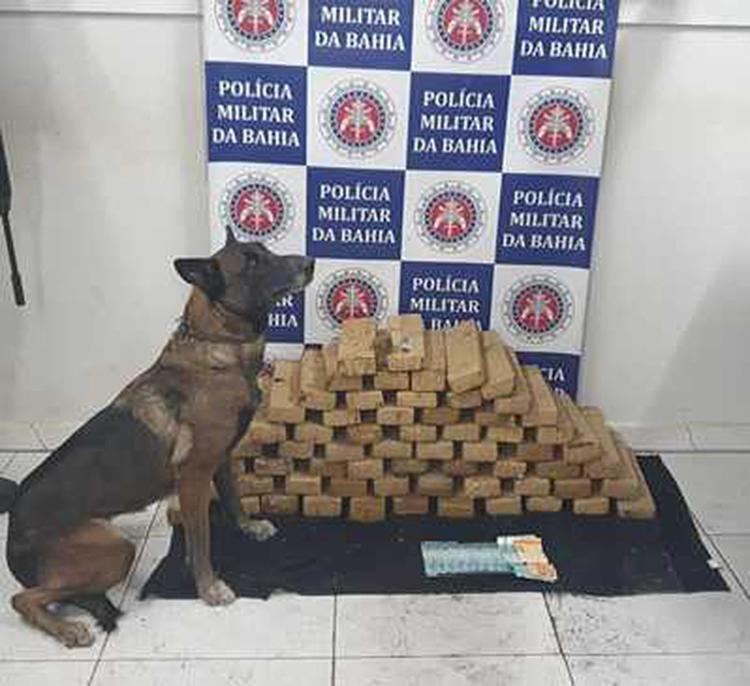 Suspeitos foram encontrados graças a cadela policial 'Diva' - Foto: Divulgação | SSP