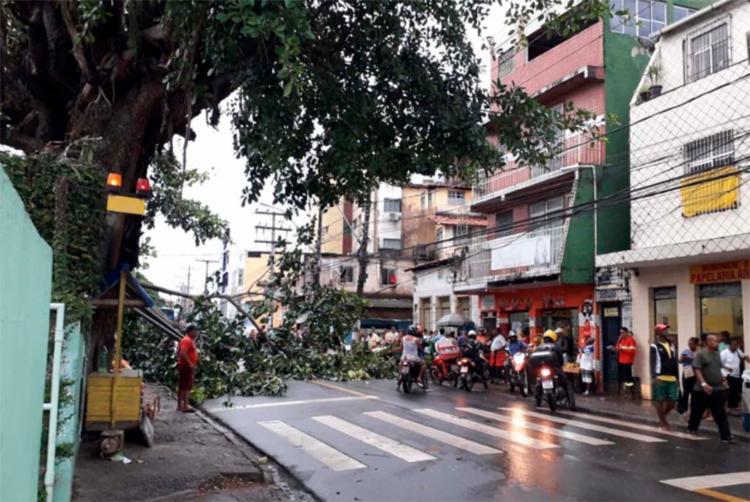 No bairro do IAPI, uma árvore caiu e acabou atingindo a rede elétrica próxima ao Hospital Mário Leal