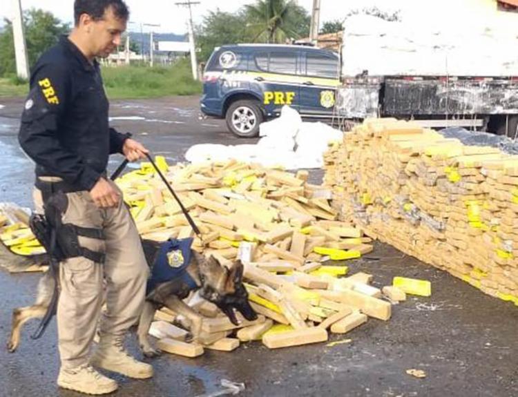 Policiais localizaram as drogas com ajudade cães farejadores - Foto: Paulo José | Acorda Cidade