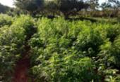 Polícia localiza fazenda com cerca de 10 toneladas de maconha | Foto: SSP I Divulgação