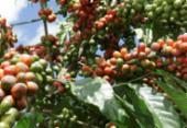 Aumento no consumo anima cafeicultores | Foto: Joá Souza | Ag. A TARDE | 30.03.2011