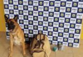 Cão farejador encontra drogas em ônibus de turismo | Divulgação | PRF