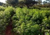 Polícia localiza fazenda com cerca de 10 t de maconha | Divulgação | SSP-BA