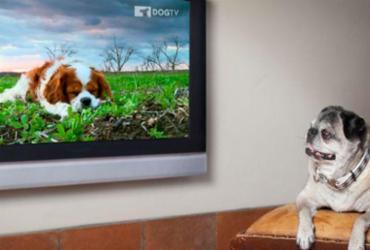 Festival de cinema para cães acontece em Salvador | Divulgação | DOGTV