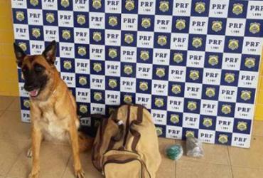 Cão farejador encontra drogas em ônibus de turismo na BR-116 | Divulgação | PRF
