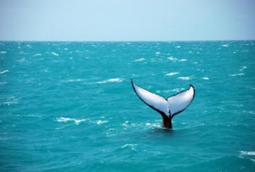 Festival incrementa fluxo turístico na Costa das Baleias
