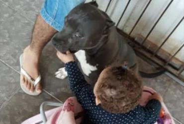 Bebê morre após ser atacada por pitbull no interior da Bahia | Reprodução | Redes Sociais