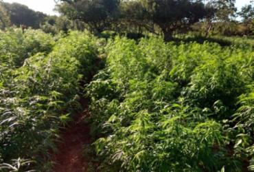 Polícia localiza fazenda com cerca de 10 toneladas de maconha | SSP I Divulgação