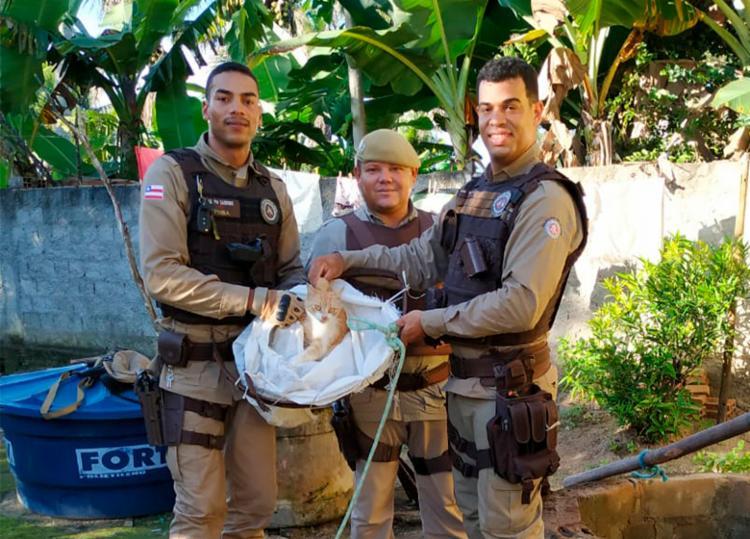 Rápidos no resgate, policiais devolveram o animal para sua dona em segurança - Foto: Divulgação   SSP-BA