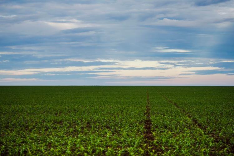 O novo marco prevê alterações nos rótulos e nas bulas dos agrotóxicos - Foto: Marcelo Camargo | Agência Brasil