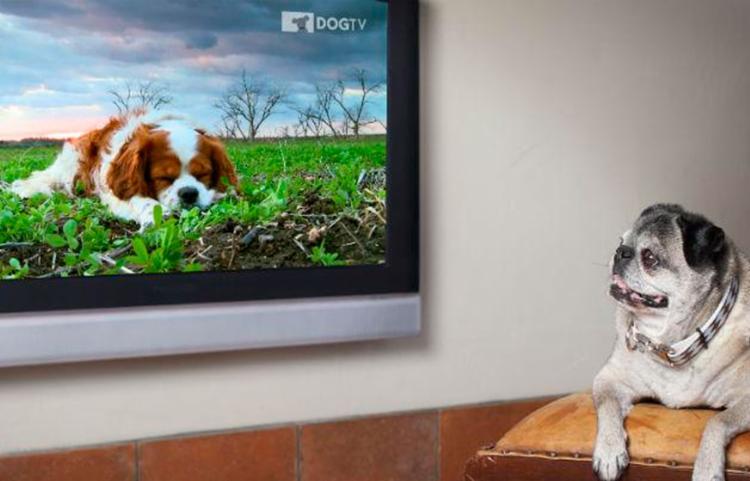 Exibição dos filmes conta com o apoio do DOGTV - primeiro e único canal de televisão desenvolvido especialmente para cães - Foto: Divulgação   DOGTV