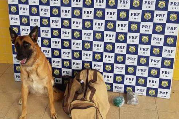 Durante a abordagem, os policiais contaram com o auxílio do cão farejador K-9 Friedel - Foto: Divulgação | PRF