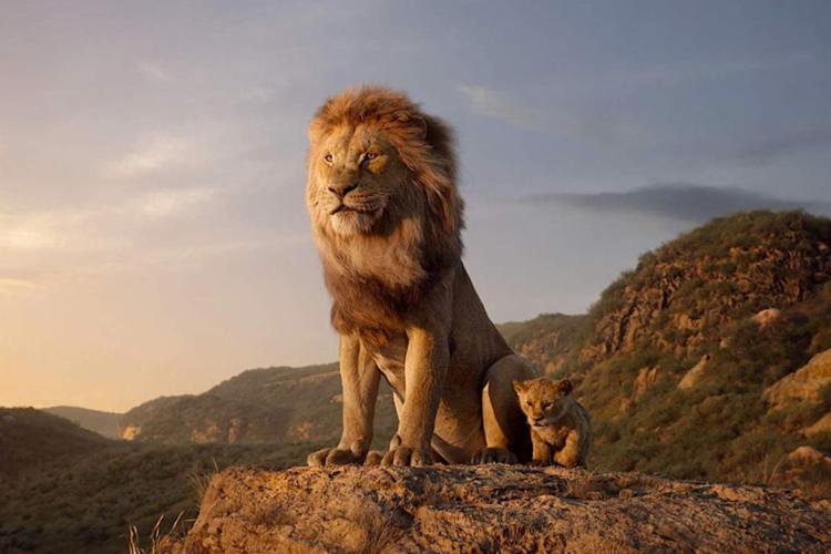 Nova versão do Rei Leão estreia na próxima quinta-feira - Foto: Divulgação I Disney