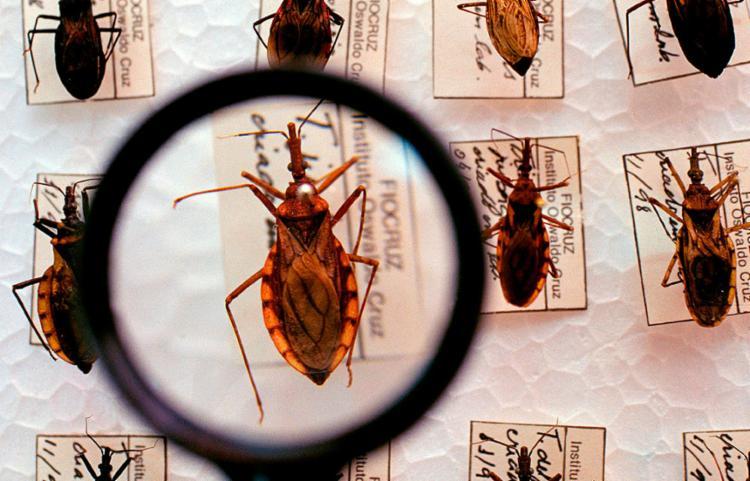 Evento irá apresentar o cenário epidemiológico da Doença de Chagas na Bahia - Foto: Fiocruz | Divulgação