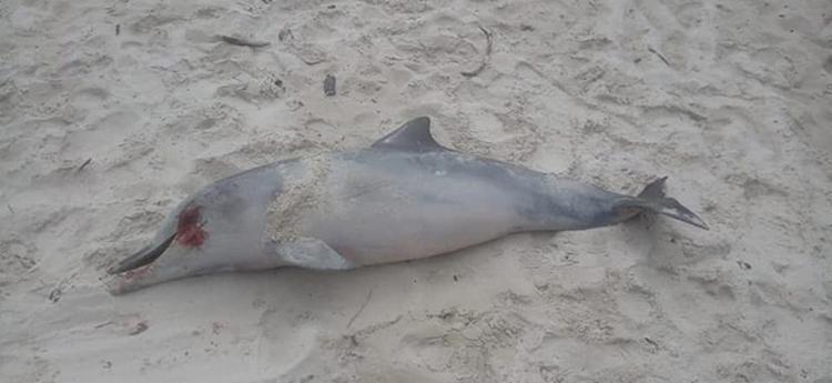 O animal apresentava diversos ferimentos - Foto: Reprodução | Bahia10