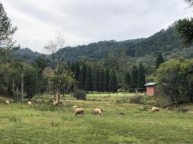 Na Tour do Vale, é possível passear por propriedades rurais que contam a história de Gramado - Foto: Bruna Castelo Branco