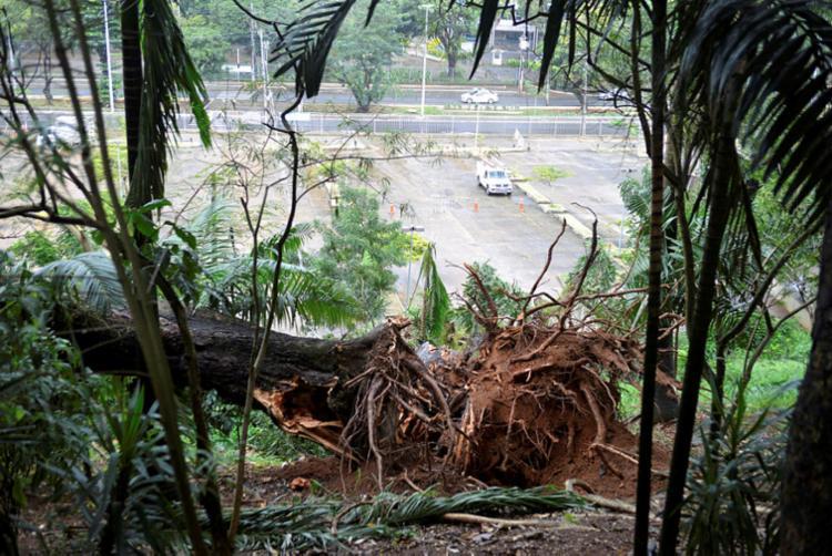 Árvore caiu na rede elétrica do Hospital das Clínicas