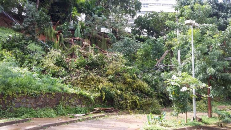 A árvore caiu por cima dos fios elétricos - Foto: Shirley Stolze I Ag. A TARDE