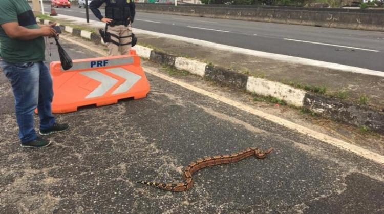 Os agentes federais 'conduziram' o animal até a vegetação que às margens da pista - Foto: Divulgação | PRF