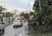 Queda de árvore causa lentidão no Ogunjá | Foto: Cidadão Repórter I Via WhatsApp