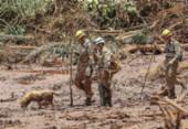 Brumadinho: cães e gatos resgatados da lama irão a feira de adoção | Foto: Ricardo Stuckert | Divulgação
