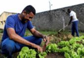 Internos da Colônia Penal Lafayete Coutinho cuidam de horta para ganhar liberdade | Foto: Uendel Galter | Ag. A TARDE