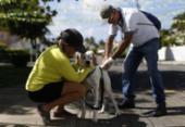 Cidade Baixa contará com atendimentos veterinários gratuitos | Foto: Raul Spinassé | Ag. A TARDE