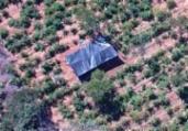 Plantação com 40 mil pés de maconha é erradicada na BA | Divulgação | SSP-BA