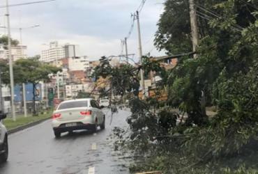 Queda de árvore causa lentidão no Ogunjá | Cidadão Repórter I Via WhatsApp