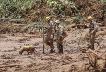 Brumadinho: cães e gatos resgatados da lama irão a feira de adoção | Ricardo Stuckert | Divulgação