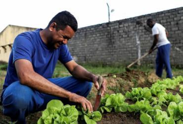 Internos da Colônia Penal Lafayete Coutinho cuidam de horta para ganhar liberdade | Uendel Galter | Ag. A TARDE