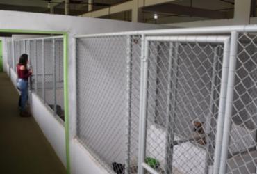 Centro de proteção animal é referência   Divulgação   MP-BA