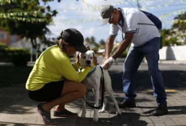 Cidade Baixa contará com atendimentos veterinários gratuitos
