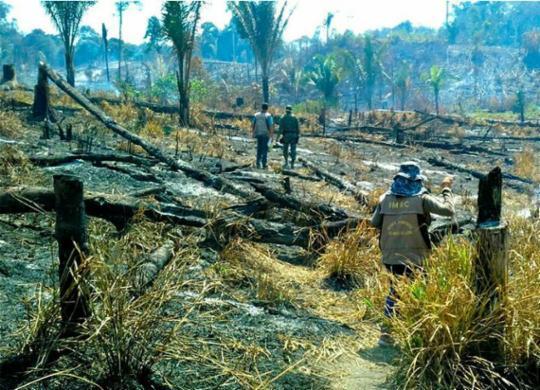 Salvador recebe ato em defesa da Amazônia; protestos ocorrem em outras 18 capitais | Divulgação | BPA