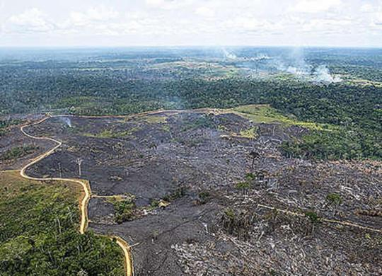 Bolsonaro autoriza Forças Armadas na Amazônia para combate a incêndios | Reprodução l greenpeace.org/brasil