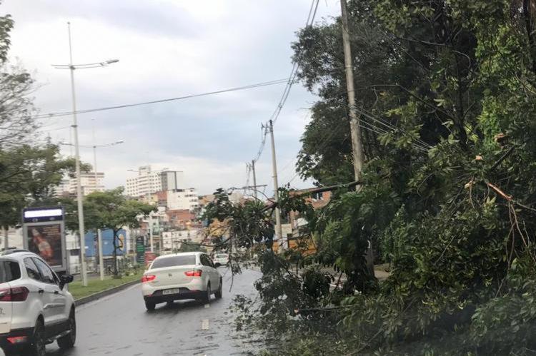 Árvore interdita uma das faixas da avenida - Foto: Cidadão Repórter I Via WhatsApp