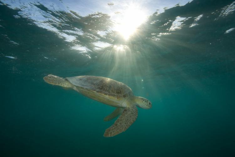 Entidades alertam que exploração de petróleo na região coloca em risco a vida marinha e as populações costeiras - Foto: Paul Nicklen   Divulgação   13.3.2010