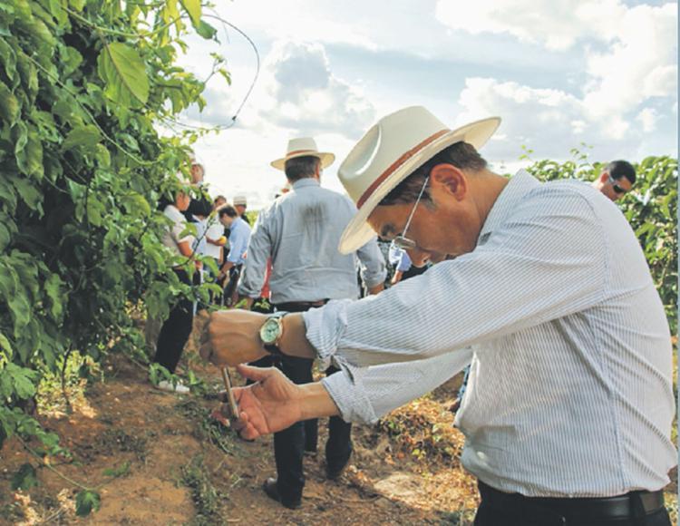 Visitantes conhecerão a cadeia produtiva do agronegócio de diversos grãos na região oeste da Bahia - Foto: Daniel Fagundes | Trilux