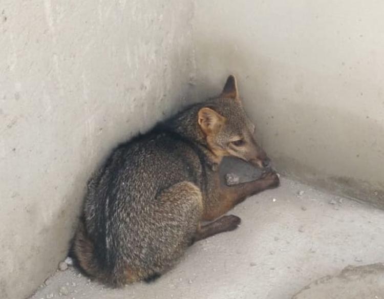 O animal foi conduzido até uma área de reserva ambiental - Foto: Divulgação   CBMBA