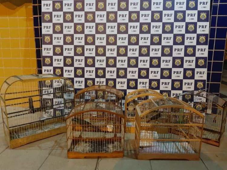 Animais estavam em ambiente sem ventilação - Foto: Divulgação   PRF