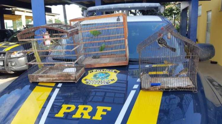 Aves foram encaminhadas para o Inema - Foto: Divulgação   Agência PRF