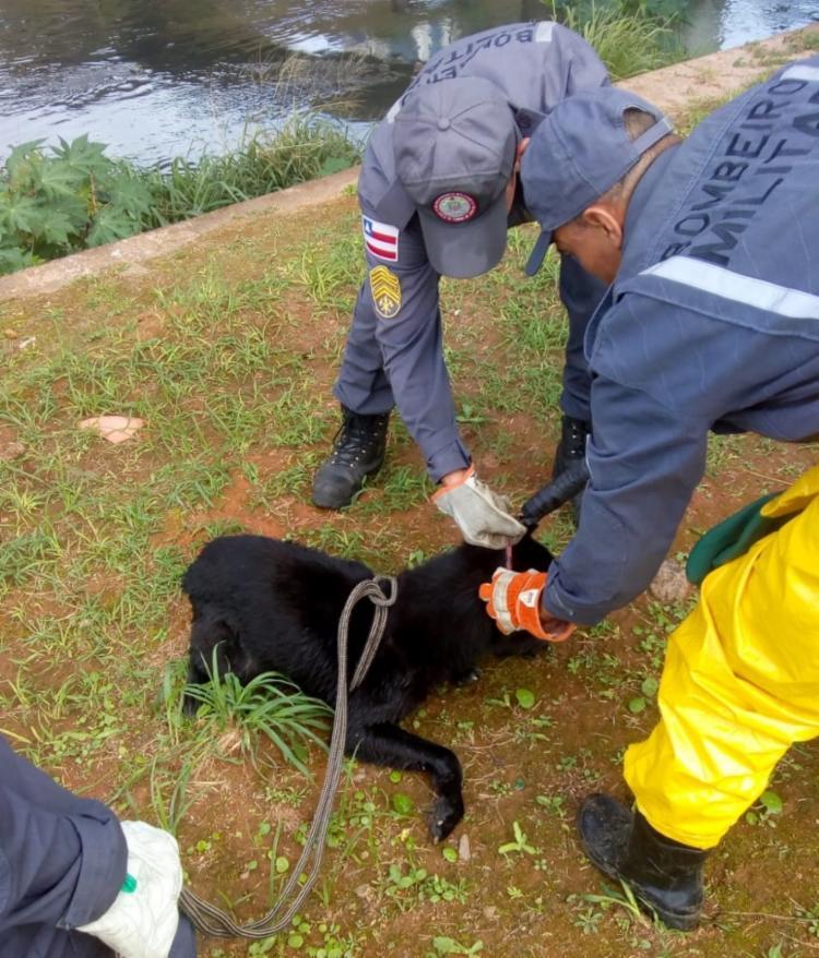 Uma pessoa que acompanhou a ação adotou o cachorro - Foto: Divulgação | Polícia Civil